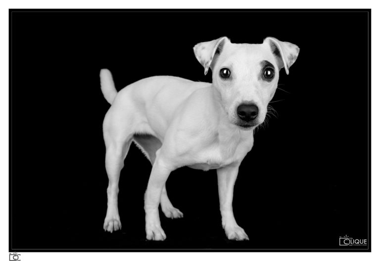 Animaux chien photo